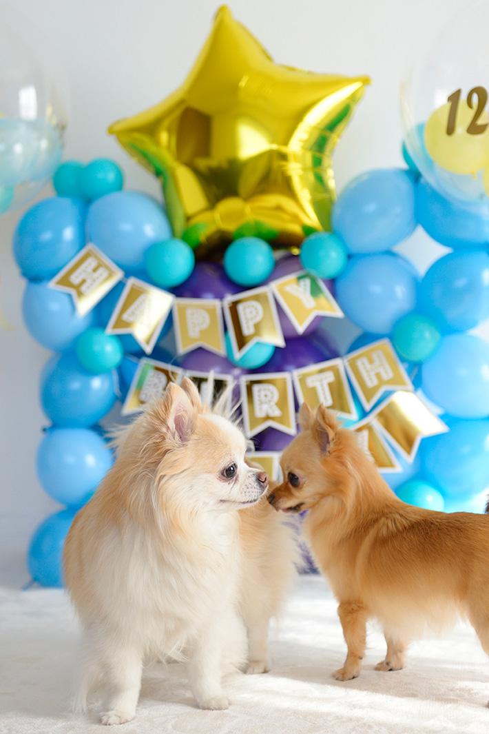 ペットの誕生日お城バルーンパーティーセット