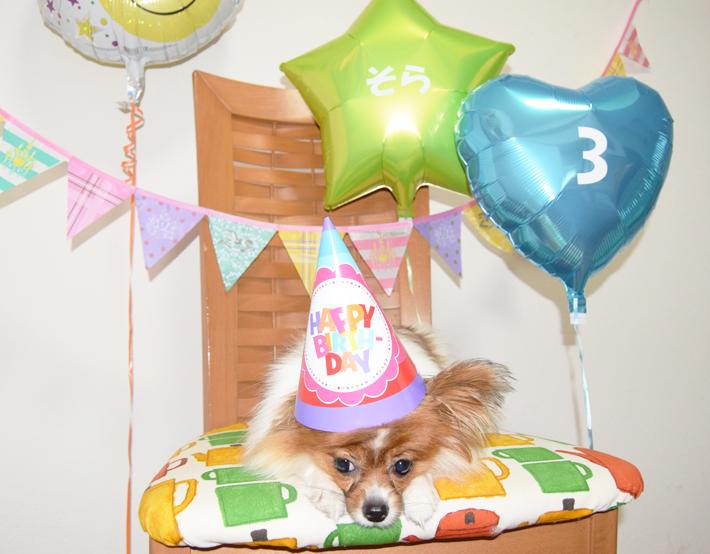 愛犬の誕生日バルーンパーティーセット(ブルー)