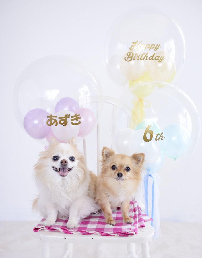 ペットの誕生日フリンジバルーン