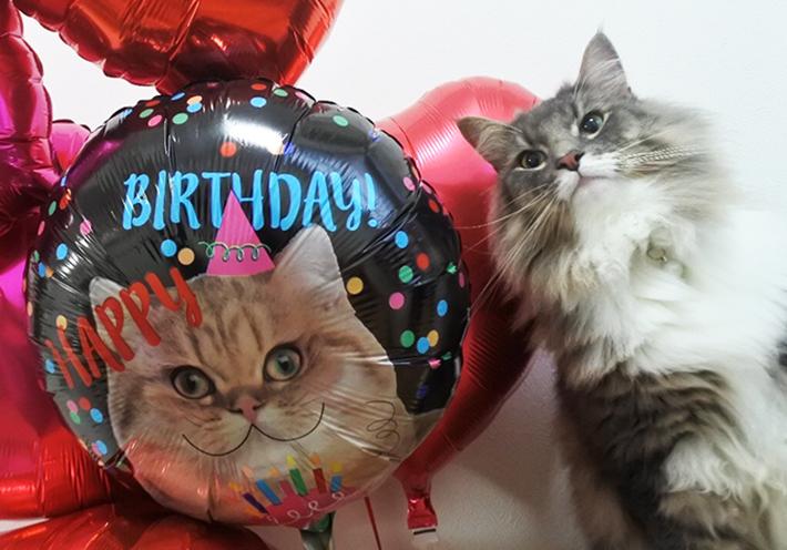 犬ネコペットの誕生日バルーン
