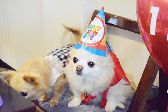 愛犬ペットの誕生日